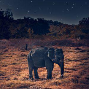 african-elephant-elephant-mammal-1750820 copy